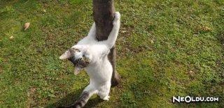 Kedilerden Geçebilecek Hastalıklar