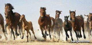 At Burcu Kadını Genel Özellikleri