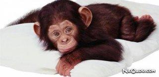 Maymun Burcu Erkeği Genel Özellikleri