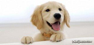 Köpek Burcu Kadını Genel Özellikleri