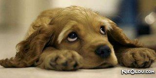 Köpek Burcu Erkeği Genel Özellikleri