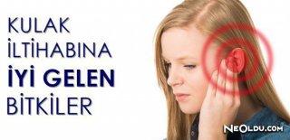 Kulak İltihabına İyi Gelen Bitkiler