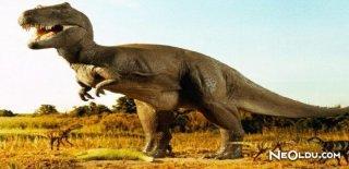 Nesli Tükenmiş Hayvanlar ve Kurtarılma Hikayeleri