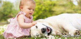 Dünyanın En Zeki 10 Köpeği