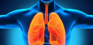 Bilim İnsanları Akciğerlerin Kan Ürettiğini Keşfettiler