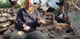 Aydın'da Tavuklar Mavi Renk Yumurtladı