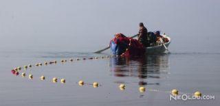 Tonlarca Gümüş Balığı Avrupa'ya İhraç Ediliyor