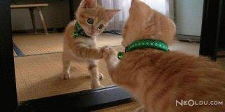 Hayvanlar Aynada Kendini Tanıyor Mu?