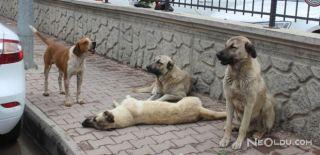 Gezi Parkı'ndaki Köpekler Toplandı