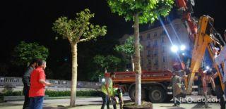 Taksim'deki Ağaçlandırma Çalışmaları Bitti