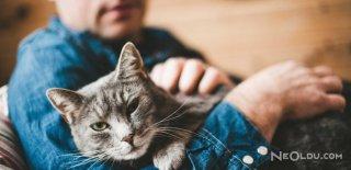 Kedilere Has Davranışlar