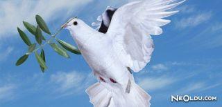 Zeytin Dalı ve Güvercin Neden Barışın Sembolü