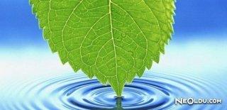 Su Ve Vücudumuzda Ki Önemi