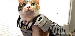 Kediler ve Köpekler Samurai Oldu