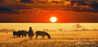 Afrika'nın Vahşi Doğası Sanatla Buluştu