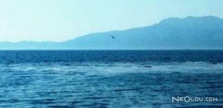 Denizin Ortasında Beliren Görüntü Korkuttu!