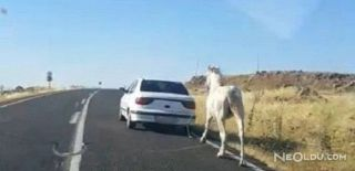 Otomobile Bağladığı Atı Saatlerce Koşturdu