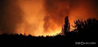 İzmir'deki Yangında 6 Hektar Orman Kül Oldu!