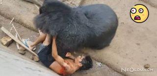 Tayland'da Korkunç Ayı Saldırısı
