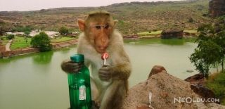 Maymun İstilasına Karşı Asker Devrede