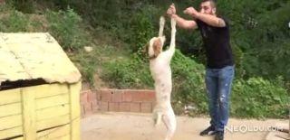 Trabzon'da Bir Köpek Sahibiyle Kolbastı Oynuyor