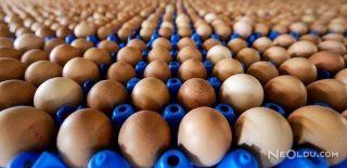 Avrupa'da Zehirli Yumurta Skandalı Büyüyor