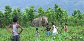 Hindistan'da 15 Ölüme Neden Olan Fil Öldürüldü