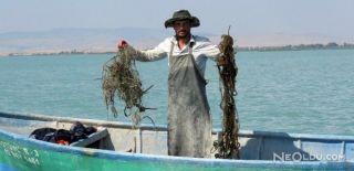 Balık Değil 'Hayalet Ağ' Avlıyorlar