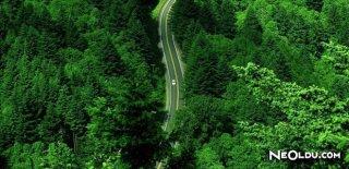 Orman Zengini Ülkeler
