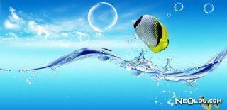 Deniz Suyu Mucizesi