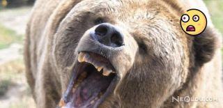 Vahşi Hayvanlar Tarafından Parçalanmış Ceset Bulundu