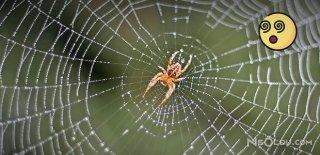 Örümcekleri Evinizden Uzak Tutmak İçin 5 Yol