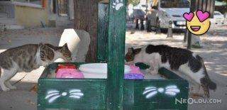 Sokak Hayvanları İçin Restoran Yaptı!