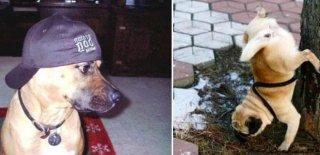 Mutlaka Görmeniz Gereken En Eğlenceli 15 Köpek