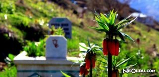 Ters Lale Çiçeğinin Hikâyesi
