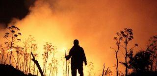 Bodrum'da Çıkan Yangın Yerleşim Yerlerine Ulaştı