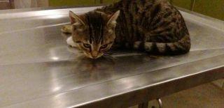 Minik Kedi Duyarlı Vatandaş Tarafından Kurtarıldı