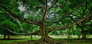 Falda Ağaç Gövdesi Görmek Ne Anlama Gelir?