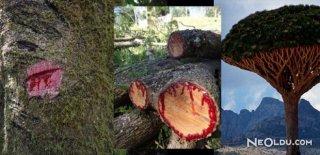 Kan Kusan Ağaç