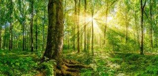 Doğada Yiyecek Nasıl Bulunur ?