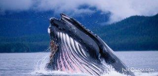 En Uzun Yaşayan Hayvan Türleri