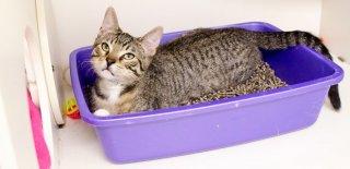 Kedi Kumu Çeşitleri Nelerdir ve Nasıl Kullanılır?