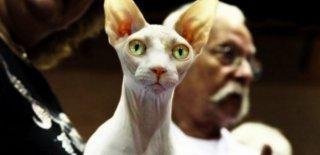 Dünya'nın En Pahalı ve En Değerli 22 Kedi Irkı