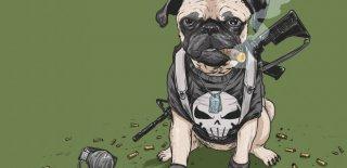 Tarihteki Savaşlarda Rol Oynamış 20 Kahraman Hayvan