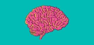 Hafızanızı Fil Gibi Güçlendirecek 10 Yiyecek ve İçecek