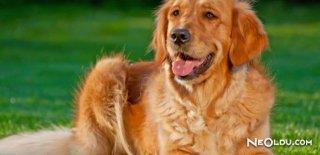 Köpekler İnsanları Nasıl Anlıyor?