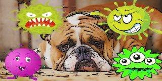 Köpeklerde En Çok Görülen 15 Hastalık