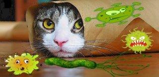 Kedilerde En Çok Görülen 16 Yaygın Hastalık!