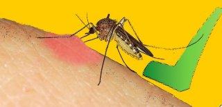 Sivrisineklerden Korunmanın Doğal Yolları!