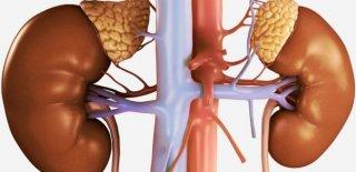 Adrenal Yetmezliği Nedir? Teşhisi ve Tedavi Yöntemleri
